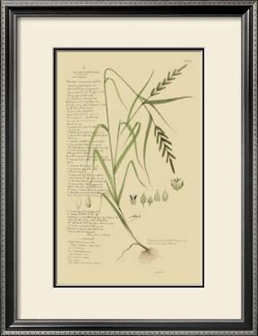 Ornamental Grasses I by A. Descubes