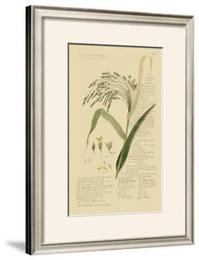 Ornamental Grasses V by A. Descubes