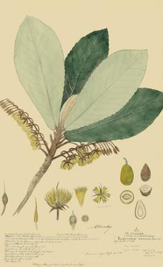 Tropical Descubes I by A. Descubes