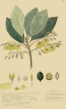 Tropical Descubes II by A. Descubes