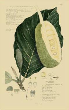 Tropical Fruits IV by A. Descubes