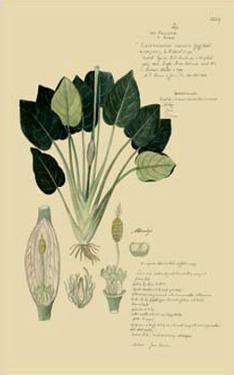 Tropical Grasses I by A. Descubes