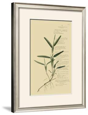 Tropical Grasses IV by A. Descubes