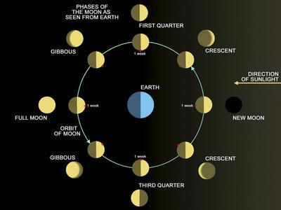 https://imgc.allpostersimages.com/img/posters/a-diagram-showing-the-phases-of-the-earth-s-moon_u-L-PJ0MD30.jpg?artPerspective=n
