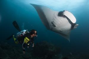 A Diver Has a Very Close Encounter with a Giant Oceanic Manta Ray