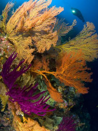 https://imgc.allpostersimages.com/img/posters/a-diver-looks-on-at-a-colorful-reef-with-sea-fans-solomon-islands_u-L-PJ0ZPS0.jpg?p=0