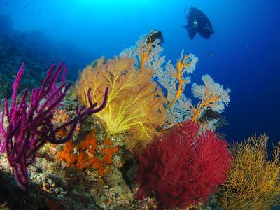 https://imgc.allpostersimages.com/img/posters/a-diver-looks-on-at-a-colorful-reef-with-sea-fans-solomon-islands_u-L-PJ0ZQF0.jpg?p=0