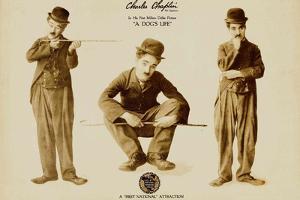 A Dog's Life Movie Charlie Chaplin Tramp Scraps