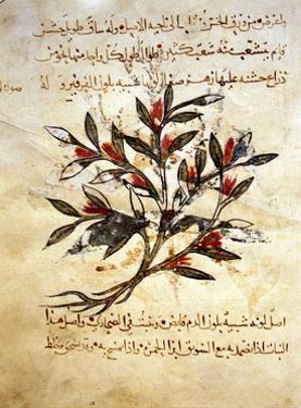 """A Folio from the Arabic Version of Dioscorides """"De Materia Medica"""""""