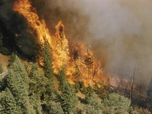 A Forest Fire Casts a Pall of Smoke