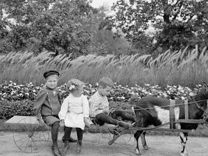 A Goat Team, Highland Park, Rochester, N.Y.