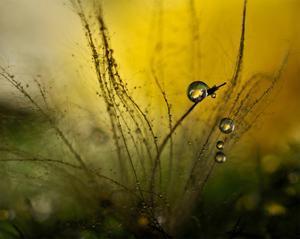 A Golden Morning Shower