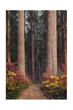 Colorful Shrubs Envelope a Path Beneath Towering Evergreen Trees by A. H. Barnes