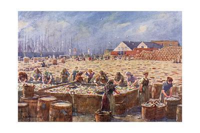 Herring Harvest,Yarmouth