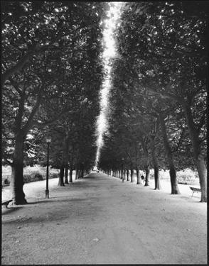 Forêt Longue by A.J. Casson
