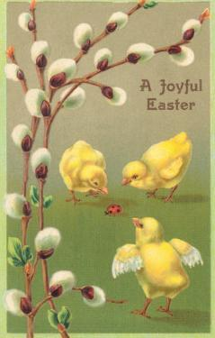 A Joyful Easter, Chicks and Pussy Willows