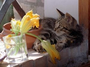 A Kitten Playing with Flower, August 1997