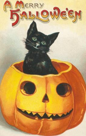 A Merry Halloween, Cat in Jack O'Lantern