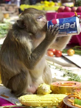 A Monkey Drinks Cola