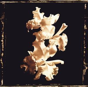 Flower Study II by A. Murray