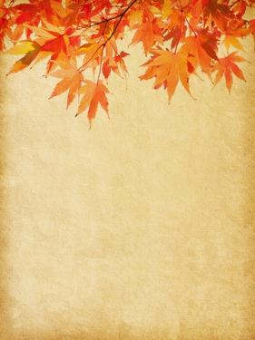 Old Paper with Autumn Leaves by A_nella