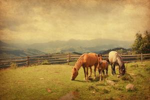 Two Horses and Foal  in Meadow.  Photo in Retro Style. Paper Texture. by A_nella