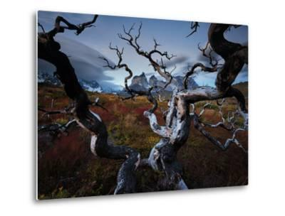 A Patagonia Scenic of the Andes Mountains, Weathered Dead Tree Branches, Clouds, and Vegetation
