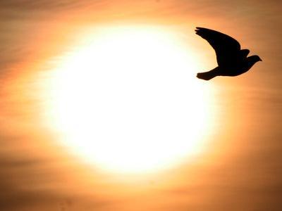 https://imgc.allpostersimages.com/img/posters/a-pigeon-flies-at-sunrise-near-the-bulgarian-black-sea-town-of-varna_u-L-Q10OVEP0.jpg?p=0