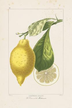 Les Citrons II by A. Poiteau
