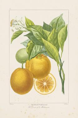 Les Oranges I by A^ Poiteau