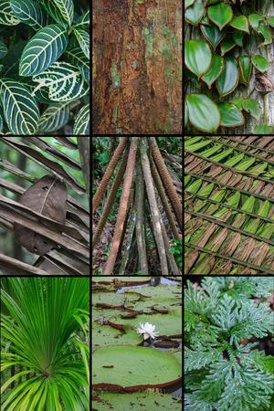 https://imgc.allpostersimages.com/img/posters/a-poster-featuring-plants-found-in-the-jungles-of-the-peruvian-rainforest_u-L-Q1D0FHC0.jpg?p=0