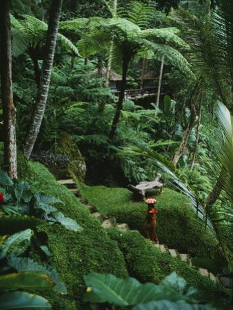 A Resort Worker Walks up the Steps of a Path Cut Through Dense Jungle