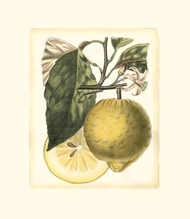 French Lemon Study I by A. Risso