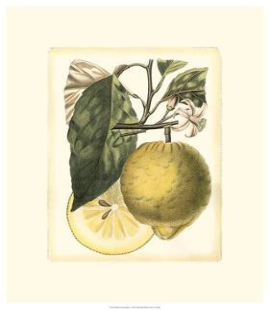 French Lemon Study I by A^ Risso