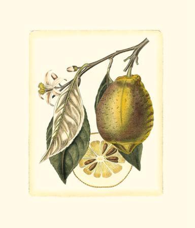 French Lemon Study II