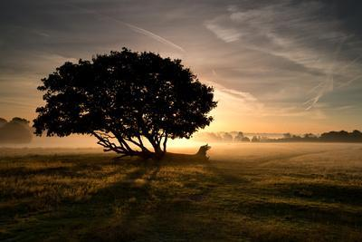 https://imgc.allpostersimages.com/img/posters/a-solitary-fallen-live-tree-under-a-dramatic-sky-on-a-misty-morning_u-L-PINZ340.jpg?p=0