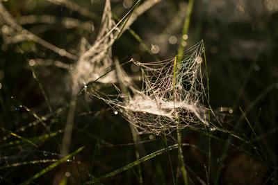 https://imgc.allpostersimages.com/img/posters/a-spiderweb-covered-in-morning-dew-dark-background_u-L-Q1EXVVH0.jpg?artPerspective=n