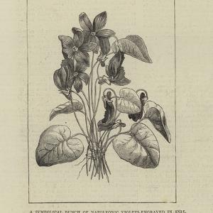 A Symbolical Bunch of Napoleonic Violets