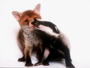 A Tale of Two Cubs, She's Always Badgering That Fox for a Kiss