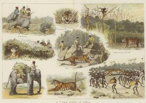 A Tiger Hunt in India