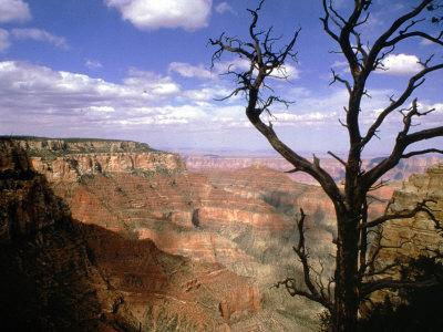 https://imgc.allpostersimages.com/img/posters/a-tree-frames-a-spectacular-view-of-arizona-s-grand-canyon_u-L-Q10OT5I0.jpg?p=0