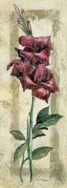 Gladiolo by A. Vega