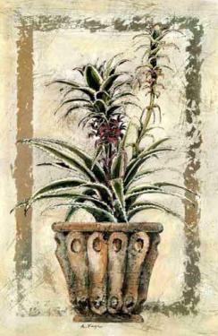 Pina-Ananas by A. Vega
