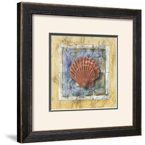 Sea Shell by A. Vega