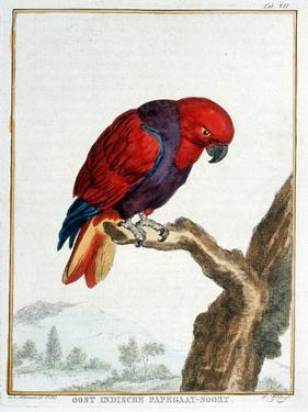 Collection of Rare Animals, Quadrupeds, Birds and Serpents, from Eastern and Western India by A. Vosmaer
