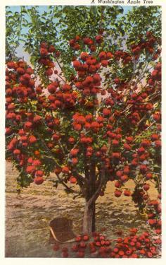A Washington Apple Tree