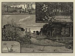 A Wild Garden at Weybridge