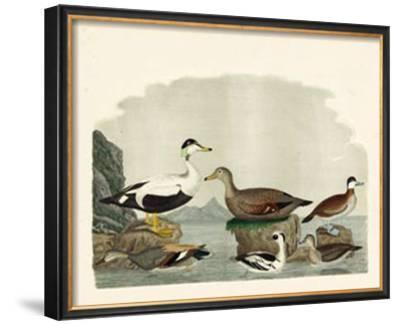 Duck Family I