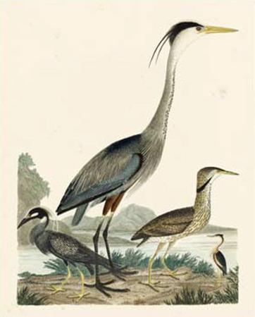 Heron Family I