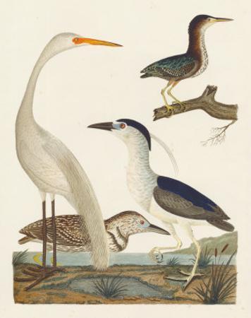 Heron Family II